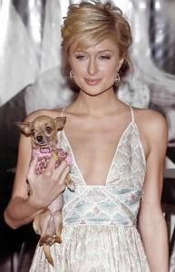 Storage ads make fun of Paris Hilton