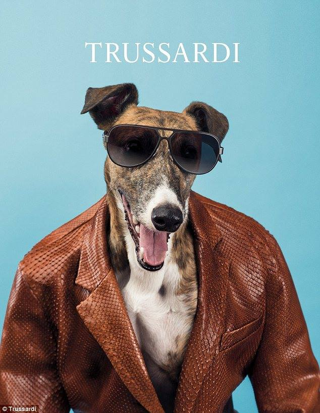 It is time to replace models by dogs – Trussardi leads the way