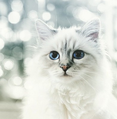 Newsmaker of the week : Choupette Lagerfeld