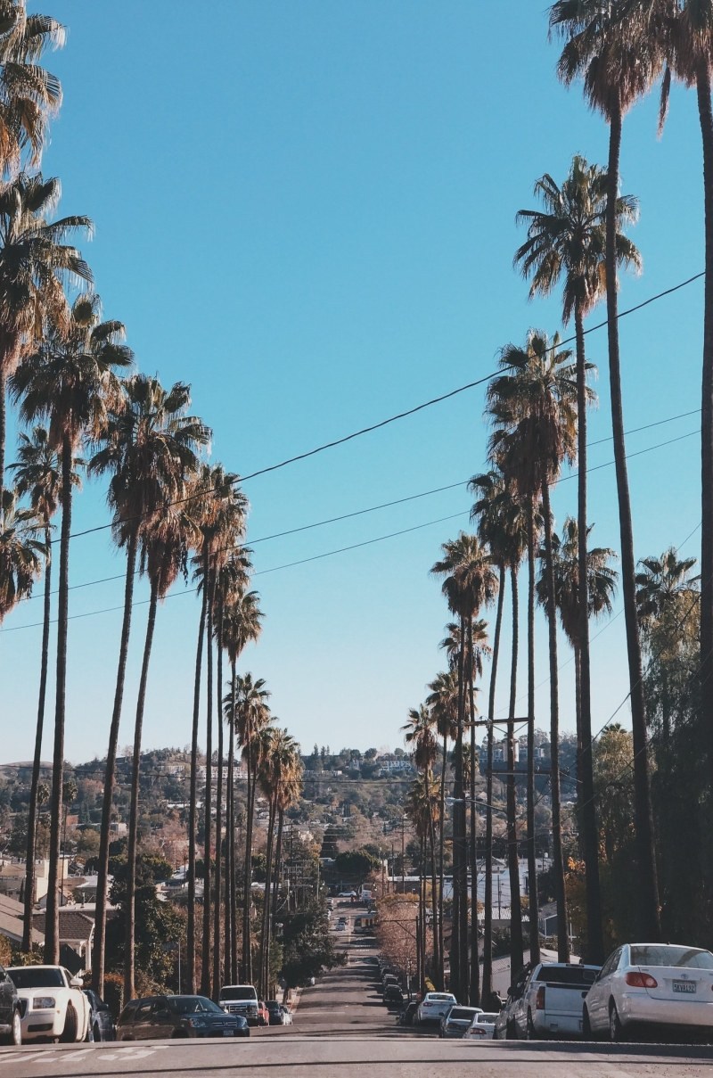California goes fur-free