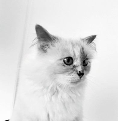 Karl Lagerfeld\'s cat Choupette is the subject of a new Book
